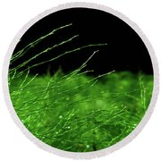 Greener On The Other Side. Round Beach Towel