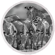Grevy Zebra Party  7528bw Round Beach Towel