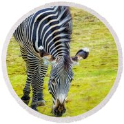 Grevys Zebra Left Round Beach Towel