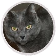 Grey Cat With Yellow Eyes Round Beach Towel