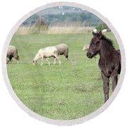 Grey Foal On Pasture Farm Scene Round Beach Towel
