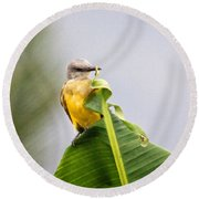Grey Headed Tanager Round Beach Towel