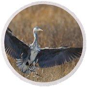 Grey Heron Landing Round Beach Towel
