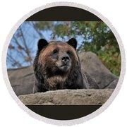 Grizzly Bear 1 Round Beach Towel
