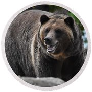 Grizzly Bear 3 Round Beach Towel