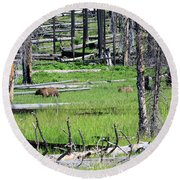 Grizzly Bear And Cub Cross An Area Of Regenerating Forest Fire Round Beach Towel