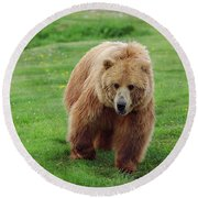 Grizzly Bear Approaching In A Field Round Beach Towel