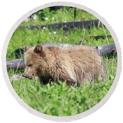 Grizzly Bear Cub In Yellowstone National Park Round Beach Towel