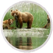 Grizzly Bear Family  Round Beach Towel