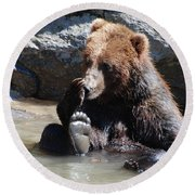 Grizzly Bear Licking His Paw While Seated In A Muddy River Round Beach Towel