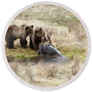 Grizzly Dinner Round Beach Towel