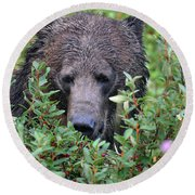 Grizzly In The Berry Bushes Round Beach Towel