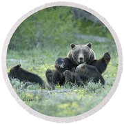 Grizzly Romp - Grand Teton Round Beach Towel by Sandra Bronstein