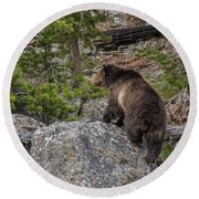 Grizzly Sow In Yellowstone Park Round Beach Towel