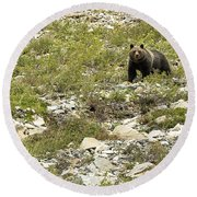 Grizzly Watching People Watching Grizzly No. 3 Round Beach Towel