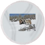 Grizzly With Coyote Round Beach Towel