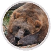 Grizzly's Naptime Round Beach Towel