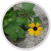 Grounded Sunflower Round Beach Towel