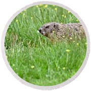 Groundhog In A Field Of Flowers Round Beach Towel