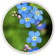 Group Of Blue Flowers Forget-me-not Round Beach Towel