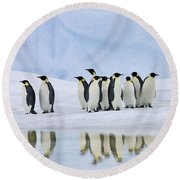 Group Of Emperor Penguins Round Beach Towel