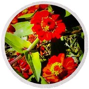Group Of Small Red Zinnia's Round Beach Towel