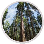 Grove Of Big Trees Round Beach Towel