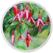 Growing In Red And Purple Round Beach Towel