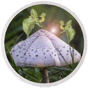 Growing Mushrooms Round Beach Towel