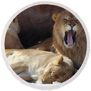 Growling Male Lion In Den With Two Females Round Beach Towel