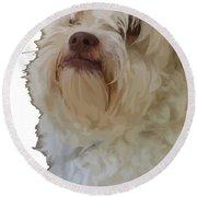 Grumpy Terrier Dog Face Round Beach Towel