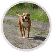 Guarding Pit Bull Dog Round Beach Towel