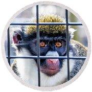 Guenon Monkey Round Beach Towel