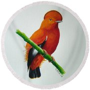 Guianan Cock-of-the-rock Round Beach Towel