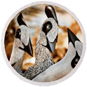 Guineafowl Family Round Beach Towel