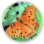 Gulf Fritillary Butterfly Cropped Round Beach Towel