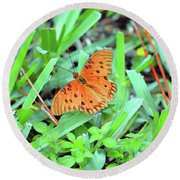 Gulf Fritillary Butterfly  Round Beach Towel