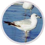 Gull - Beach -reflection Round Beach Towel
