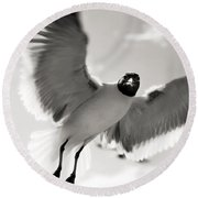 Gull In Flight 2 Round Beach Towel