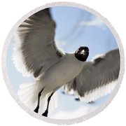 Gull In Flight Round Beach Towel