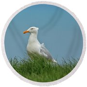 Gull Lookout Round Beach Towel