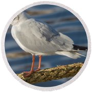 Gull On A Rope Round Beach Towel
