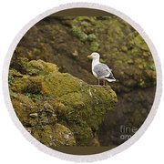 Gull On Cliff Edge Round Beach Towel