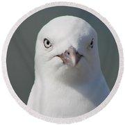 Gull Portrait Round Beach Towel