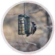 Hairy Woodpecker 1 Round Beach Towel