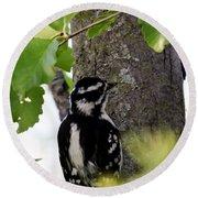 Downy Woodpecker 01 Round Beach Towel