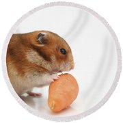 Hamster Eating A Carrot  Round Beach Towel