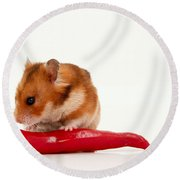 Hamster Eating A Red Hot Pepper Round Beach Towel