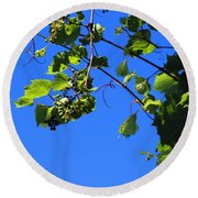 Hanging Grapes Round Beach Towel