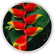 Hanging Heliconia Round Beach Towel